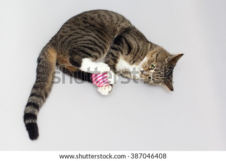 Tabby cat plays with ball - stock photo