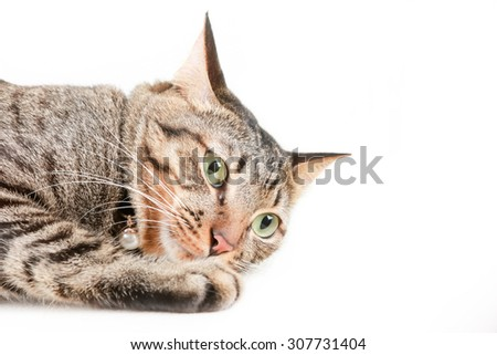 Tabby cat portrait is missing something - stock photo