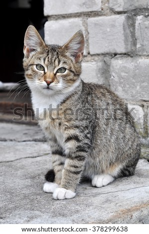 Tabby cat portrait on the porch of a house - stock photo