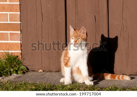 tabby cat sitting in front of a wooden garage door on a sunny day - stock photo