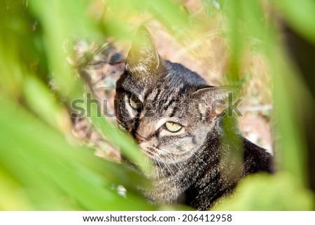 Tabby cat sitting in the grass hiding. - stock photo