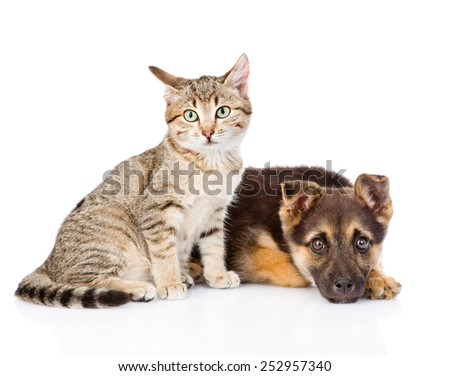 tabby cat sitting next to a sad dog. isolated on white background - stock photo