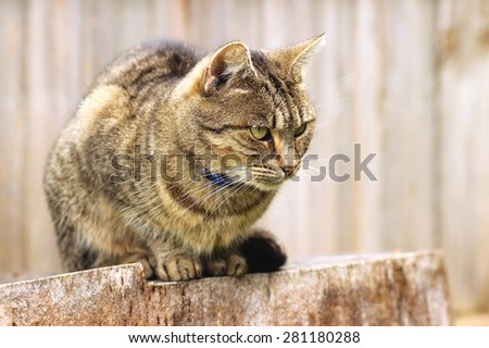 Tabby cat sitting on a stump against a wooden wall - stock photo
