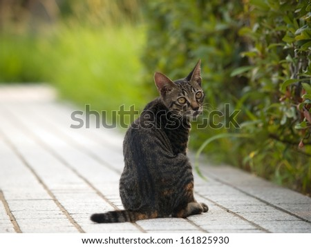 Tabby cat sitting on pavement - stock photo