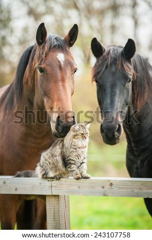 Tabby cat sitting on the fence near the horses - stock photo