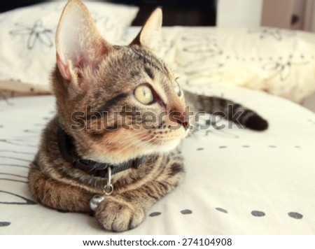 Tabby cat sleep blurry background - stock photo