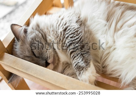 Tabby cat sleep in the wooden bed. - stock photo