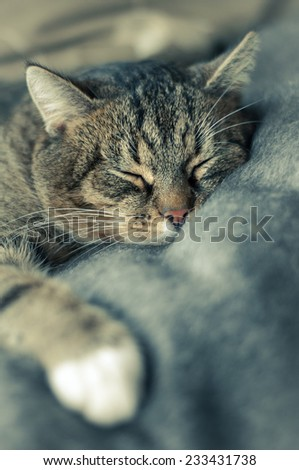 Tabby cat sleeping on a blanket - stock photo