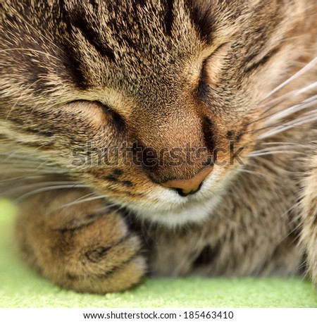 tabby cat sleeping on green background - stock photo