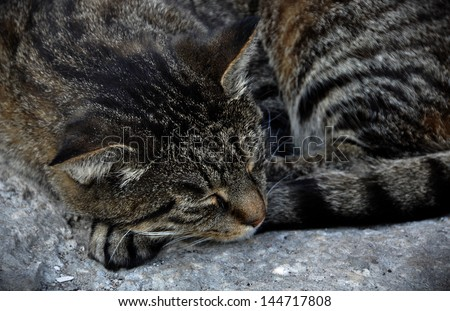 Tabby cat sleeping on the pavement.