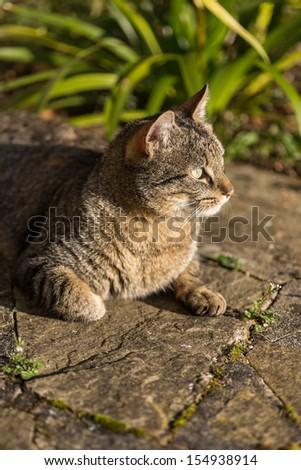Tabby cat taking a sunbath on the ground - stock photo