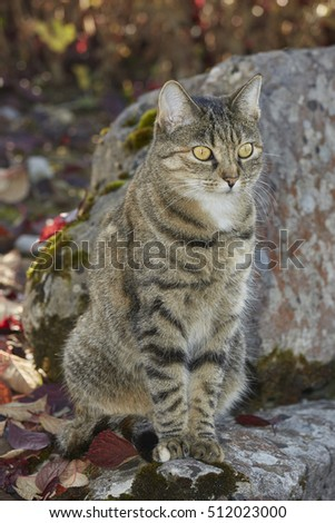 tabby female cat in autumn color
