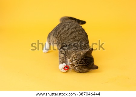 Tabby greeneyed cat playing with toy  - stock photo