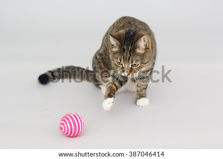 Tabby greeneyed cat playing with toy isolated on grey - stock photo