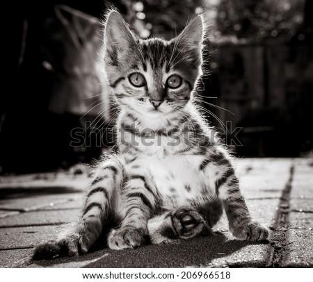 tabby kitten comfortably sat on the sidewalk. - stock photo