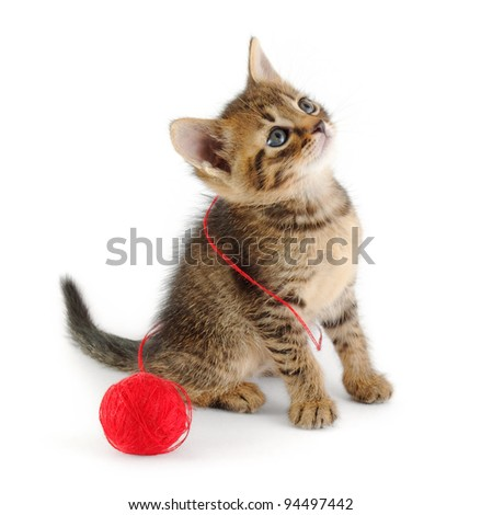 tabby kitten entangled with red thread of clew, looking up - stock photo