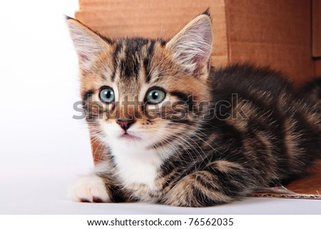 tabby kitten in a cardboard box - stock photo
