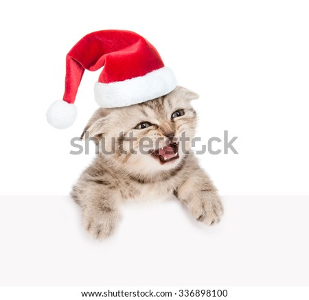 Tabby kitten in red santa hat looking out because of the poster. isolated on white background - stock photo