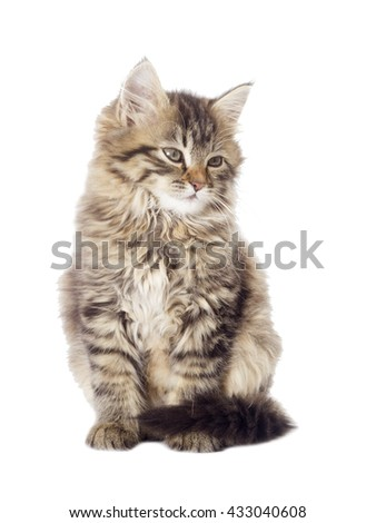 tabby kitten looking