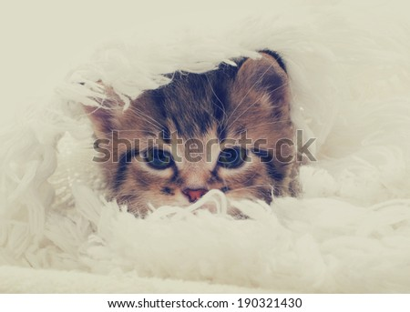 tabby kitten looks - stock photo