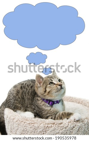 Tabby kitten lying on a cat bed looking up, thinking about something, isolated on a white background. - stock photo