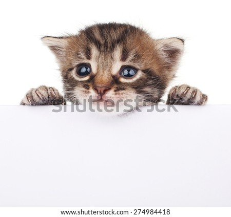 Tabby kitten peeking out of a blank sign, isolated on white background - stock photo