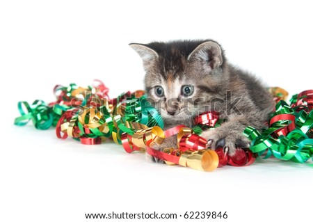 Tabby kitten playing with Christmas tinsel on white background - stock photo