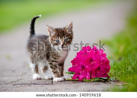 tabby kitten portrait with a flower - stock photo