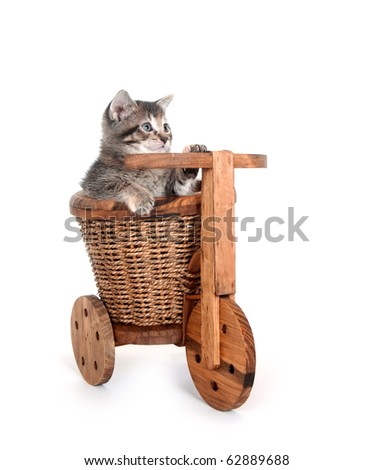 tabby kitten sitting inside flower pot shaped like tricycle on white background