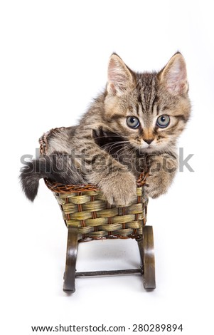 Tabby kitten sitting on a sled and looking at the camera (isolated on white) - stock photo