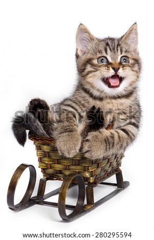 Tabby kitten sitting on a sled and meows (isolated on white) - stock photo