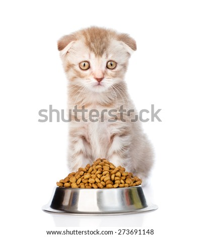 tabby kitten sitting with a bowl of dry cat food. isolated on white background - stock photo