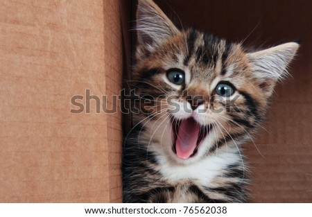 Tabby kitten smiling - stock photo