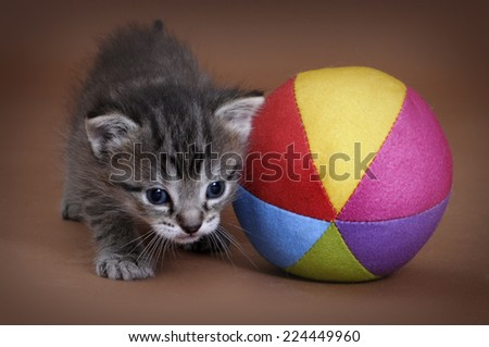 Tabby kitten 4 weeks old - stock photo