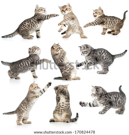 tabby kittens isolated collection - stock photo