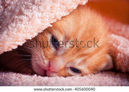 Tabby red kitten portrait - stock photo