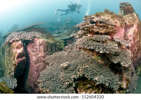 tabele coral - stock photo