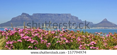 Table Mountain with flowers - stock photo