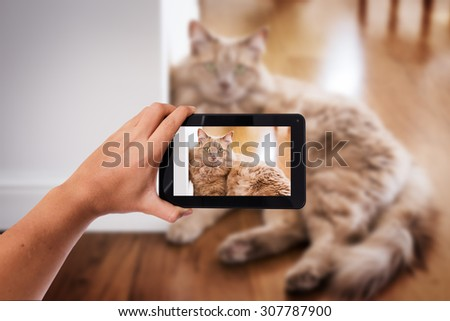 Tablet in hand photo shooting a house cat - these are all photos made by me, that you separately can find on my shutterstock portfolio. - stock photo