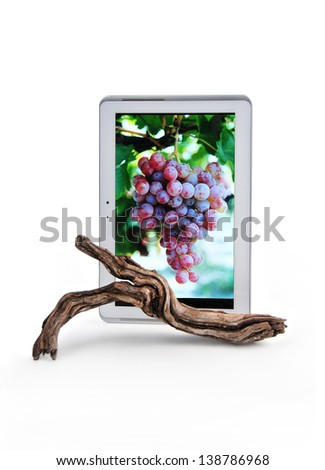 tablet with the image of a clusters of grapes and before a vineyard branch - stock photo