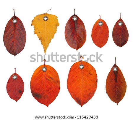 Tag label autumn leaves isolated on white background. - stock photo