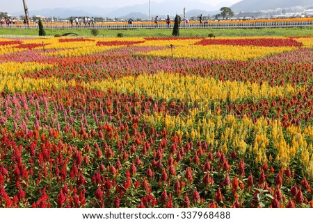 Taichung, Taiwan- 2015 November 11 : Taichung Flower Carpet Festival  by a popular local spot to do a collection of brightly colored flowers, and built a large 3D flower carpet attracts many visitors