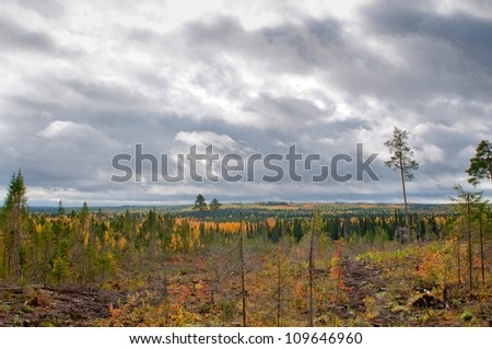 Taiga (boreal forest) in Komi region, northern Russia. - stock photo