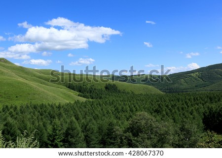 Taiga forest regions in the summer