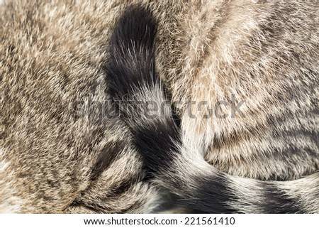 tail cat - stock photo
