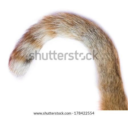 tail of a cat on white background - stock photo