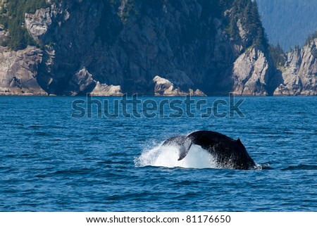 Tail of the humpback whale diving into the sea with the scenic of faraway island in Alaska. - stock photo