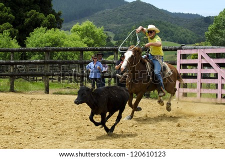 TAIPA - DECEMBER 01:Cowboy Successfully Roping a steer during a rodeo show on December 01 in Taipa, New Zealand. The roping contest has originally developed from cowboys who hold cattle for doctoring.