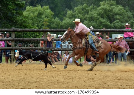 TAIPA, NZ - JAN 03:Cowboy successfully roping a steer during a rodeo show on Jan 03 2014.Rodeo is very popular sport in NZ with 32 rodeos, which include bull riding contests, are held each summer. - stock photo