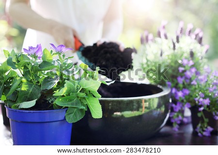 Take care of your plants.Female plants in pot plants forming a beautiful composition flower - stock photo